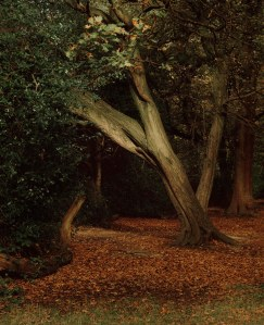 highgate_woods 001